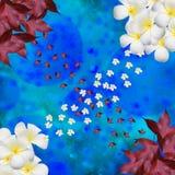 背景bokeh和花在garss 图库摄影