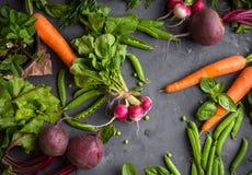 背景cabbadge红萝卜新鲜的玉米以子弹密击蔬菜 免版税库存图片
