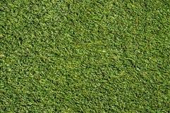 背景dof浅的草绿色 免版税库存照片