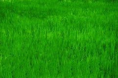 背景dof浅的草绿色 库存照片