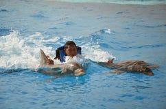 背部乘驾-海豚 免版税库存照片
