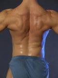 背部肌肉 免版税库存照片