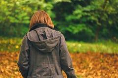 背面图偶然女性走在秋天公园 图库摄影