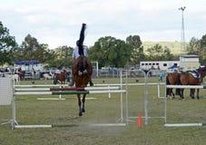 背面图展示跳跃的马&车手骑马事件在市场 免版税库存图片