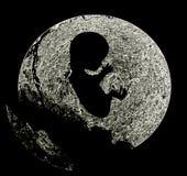 胎儿 免版税库存照片