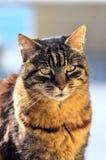 胖的猫 库存照片