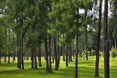 胜利公园在莫洛杰奇诺 迟来的 免版税库存图片