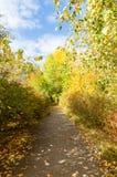 胜利大道在公园在秋天, Asbest,俄罗斯镇  库存图片