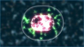细胞分裂的概念 皇族释放例证