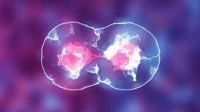 细胞划分 微生物学 3D动画 皇族释放例证