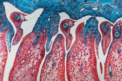 细胞抽象花 免版税库存图片