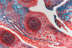 细胞抽象花 库存照片