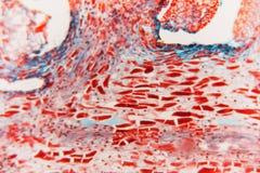 细胞抽象花 库存图片