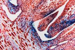 细胞抽象花 免版税库存照片
