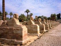 胡同卢克索狮身人面象 埃及图题头法老王雕象 免版税图库摄影