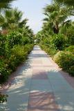 胡同在一个热带庭院里 免版税图库摄影