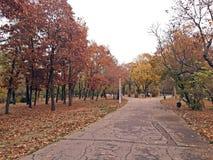 胡同在公园在五颜六色的树下 免版税库存照片