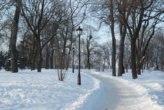 胡同在公园 冬天 免版税库存图片