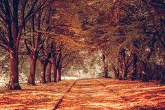 胡同在公园 9月天 免版税库存照片