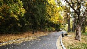 胡同在公园 免版税库存图片
