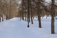 胡同在冬天公园 免版税图库摄影