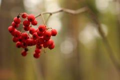 胡同在冬天具球果森林里 免版税库存照片