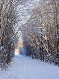 胡同在冬天森林里 免版税库存图片