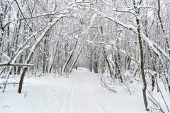 胡同在密集的森林里 免版税库存照片
