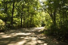 胡同在春天期间的一个公园 库存照片