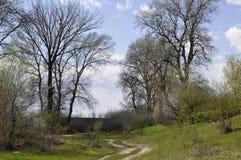 胡同在春天期间的一个公园 库存图片
