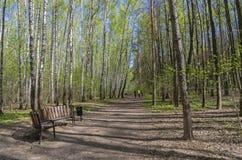胡同在春天森林公园 库存照片