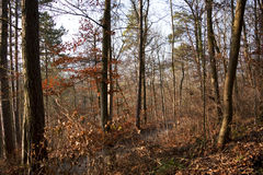 胡同在森林里 免版税图库摄影