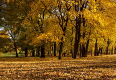 胡同在秋天森林里 图库摄影