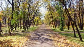 胡同在秋天的一个公园 晴朗的日 股票视频