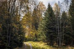 胡同在金黄秋天期间的公园 锡古尔达 免版税库存图片