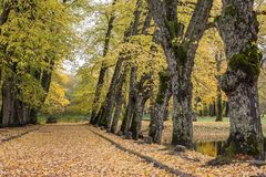 胡同在金黄秋天期间的公园 锡古尔达 免版税图库摄影