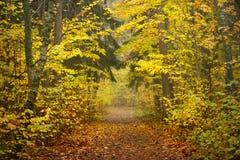 胡同在金黄秋天期间的公园 免版税库存照片