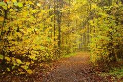 胡同在金黄秋天期间的公园 免版税库存图片