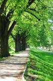 胡同夏天结构树 库存图片