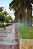 胡同棕榈树浇灌 库存照片
