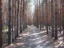 胡同森林 图库摄影