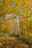 胡同森林 库存图片