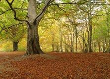 胡同槭树 免版税图库摄影