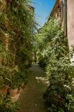 胡同看法有石房子、植物和倾斜的在圣徒保罗deVence 图库摄影