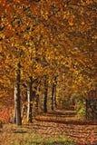 胡同离开步行红色结构树 免版税库存照片