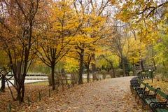 胡同秋天birchwood距离计算公园杉木二 库存图片
