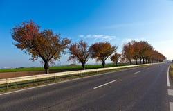 胡同街道结构树 图库摄影