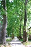 胡同:长的走道通过悬铃树 免版税库存照片