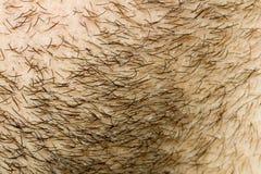 胡子表面增长头发 库存图片