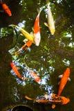 胡扯鱼在池塘 库存照片